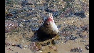 Рыбалка в ростове- на - дону
