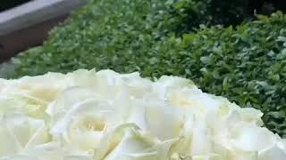 Цветы опт Рязань лучшие цены букеты розы 101роза