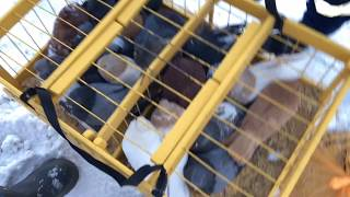 Рыбалка на птичий рынок самара карта