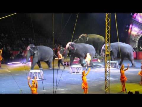 the elephants of the circus