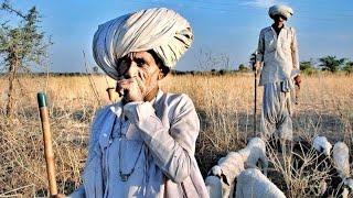 Now Rajasthani Status || New Rajasthani WhatsApp Status Video || Marwadi Song Status