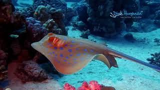 Nurkowanie dzienne- Dive Hurghada