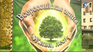 Новгородская область активно принимает участие во всероссийской акции «Живи, лес!»