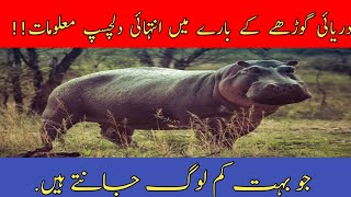 Important Information about hippopotamus || full details about hippo || Urdu / Hindi