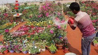 Amazing Nursery Beside On The Road Of Dhaka - Beautiful Flowers Garden With Fruits Tree - Satrong