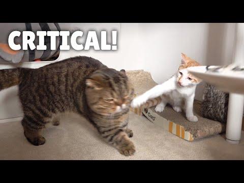 LuLu Got Smacked By a Kitten!