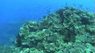 preview picture of video 'Warwick Fiji resort & Spa Coral Coast : Scuba diving introduction'