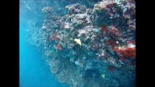 preview picture of video 'Freediving Black Rock with GoPro Hero at Kaanapali Beach on Maui Hawaii'