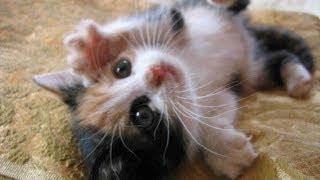 Кошки подборка смешного видео с кошками 2014 / Compilation of fun videos with cats 2014