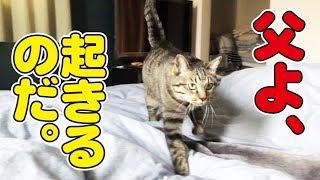 少しでも起きるのが遅くなると起こしにやって来る猫!