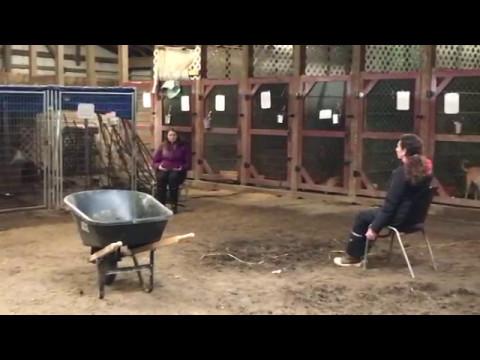 Amazing Before and After Animal Reiki Video | Animal Reiki Source ...