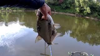 Рыбалка на реке яуза смоленской области