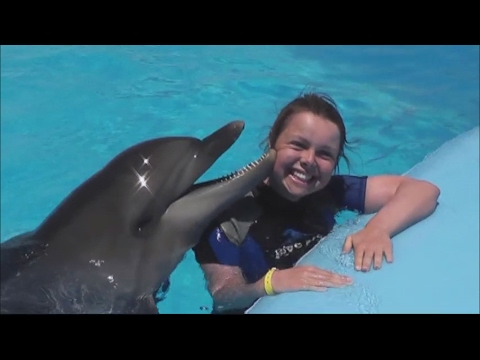 Плавание с дельфинами Дельфинарий «Dolphin World» Egypt Makadi Bay Swimming with dolphins