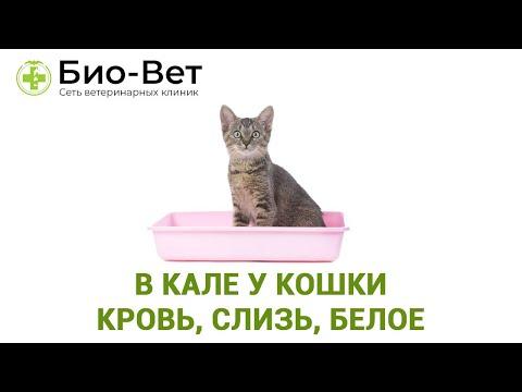 Кровь в Кале у Кошки 🙀 Причины и Лечение // Сеть Ветклиник БИО-ВЕТ