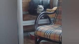 Обиженный кот Приколы с котами Приколы с котятами Приколы с кошками Смешные коты и кошки Смешные кот