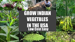 How to grow Indian Vegetables in USA STEP BY STEP EASY LOW COST Ideas Video Episode Bhavna's Kitchen
