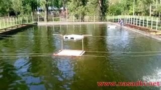 Кормление рыбы живым опарышем ч.2