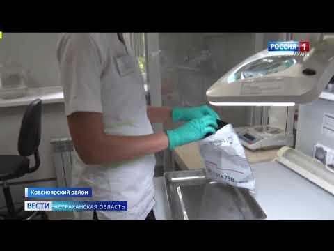 На территории Астраханской области Управлением Россельохзнадзора выявлены очаги карантинного объекта горчака ползучего