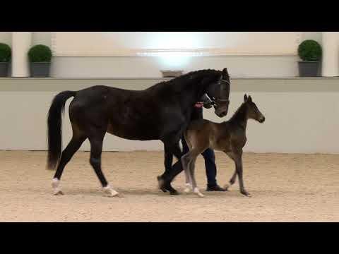 Video-Vorschau von Grey Flanell