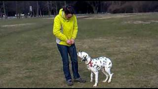 Dalmatin handling