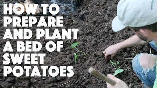 How To Prepare A Garden Bed And Plant Sweet Potatoes