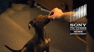 A DOG'S WAY HOME: Top 10 Cutest Moments - Now on Digital!