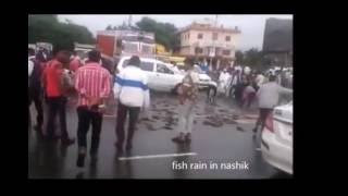 fish raining in thailand collected from BBC super natural video