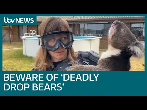 Scottish Reporter Comes Face to Face with a Drop Bear
