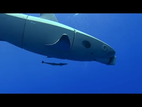 Can Roboshark fool the reef sharks? #01