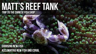 preview picture of video 'Matt's Reef Tank | Episode 2 | Trip to the Chinese Fish Shop'