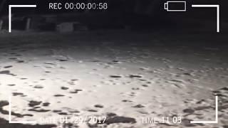 Странное загадочное существо снятое ночью на камеру слежения!
