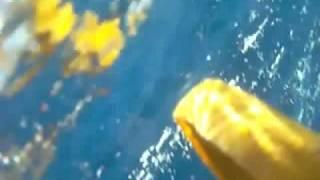Видео, снятое черепахами