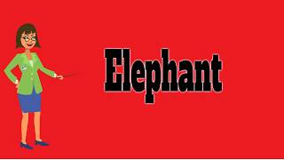 Elephant | Pronunciation | Meanings | Definition | Pictures | Animals Name HD