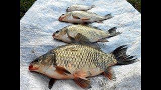 Рыбалка червяное в свердловской области