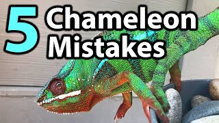 5 Common mistakes chameleon owners make | PART 1