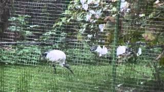 preview picture of video 'Vogelpark Bobenheim-Roxheim'