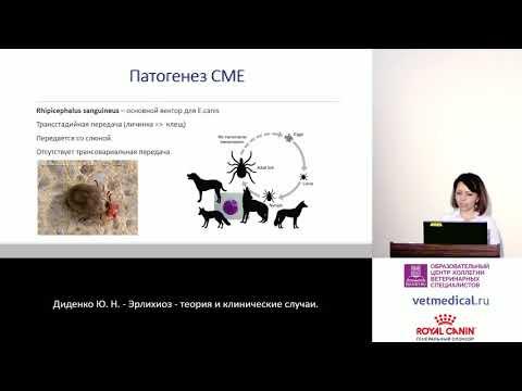 Диденко Ю. Н. - Эрлихиоз - теория и клинические случаи