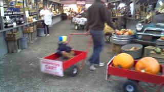 preview picture of video 'Little Leo Farmers market cart ride at Morris farm'
