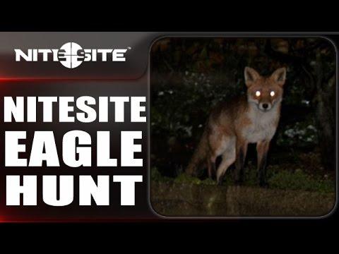 Noční lov lišky
