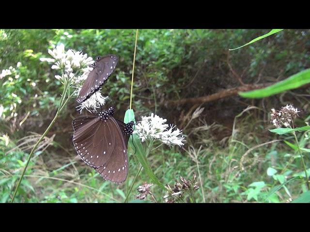 <html> <body> Film for Purple Butterfly2019-11-11 </body> </html>