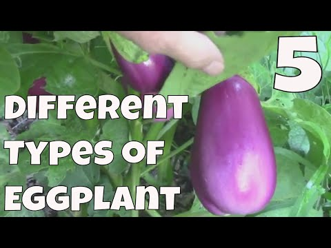 , title : '5 Different Eggplant Varieties That Grow Well In Our Zone 6 Garden.