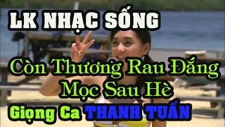 lk-nhac-song-minh-chin-vol-08-con-thuong-rau-dang-moc-sau-he