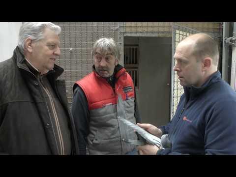 Video Dreampigeons op bezoek bij De Geest-De Cock Stekene april 2019