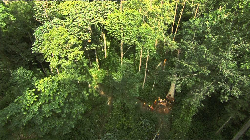 C'est pas sorcier – La forêt du Congo: sur la piste des bois tropicaux