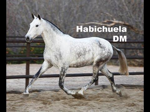 Habichuela DM - Febrero 2018