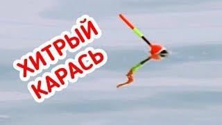 РЫБАЛКА / КЛЁВ ХИТРОГО КАРАСЯ крупным планом на ПОПЛАВОК!