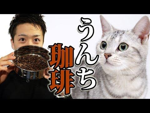 【コピルアク】超高級!ジャコウネコの糞のコーヒーを焙煎して飲んでみた!/ Kopi Luwak