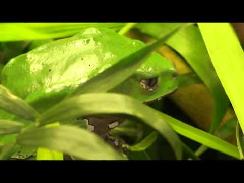 Amazing Pets Wax Frog Reality TV Clip