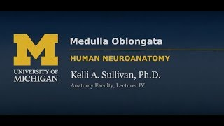 Nervous System: Medulla Oblongata