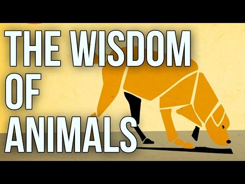 The Wisdom of Animals